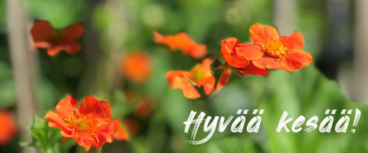Oransseja kukkia vihreällä taustalla, päällä lukee hyvää kesää.