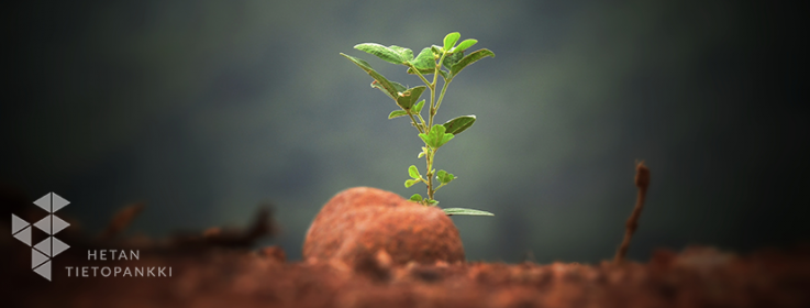 Kuvassa sumealla taustalla kasvaa pieni, vihreä taimi. Vasemmassa alakulmassa Hetan Tietopankin logo.