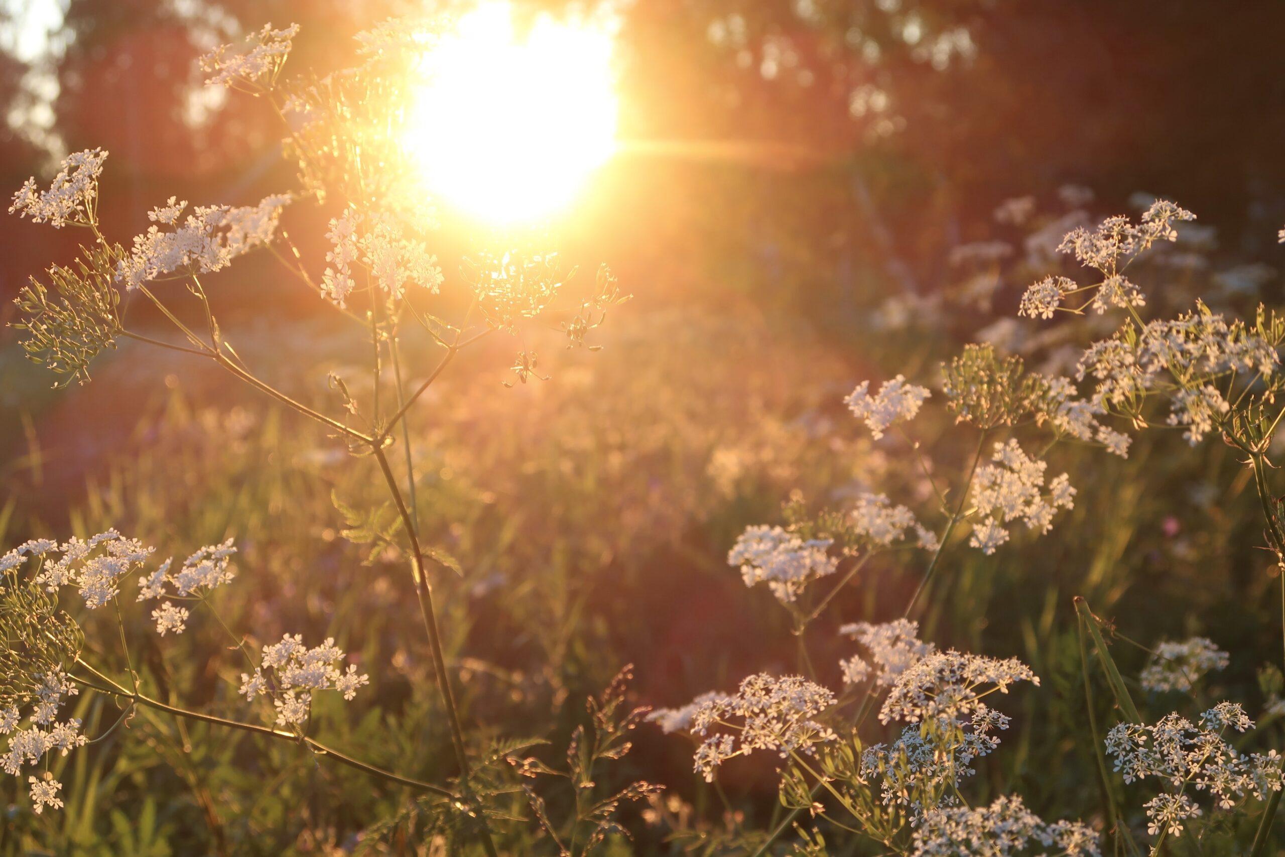 Auringonlasku Rovaniemellä luonnossa